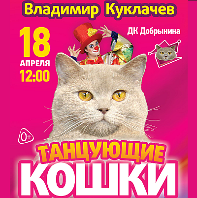 Танцующие кошки. Премьера Московского театра кошек  Владимира  Куклачёва